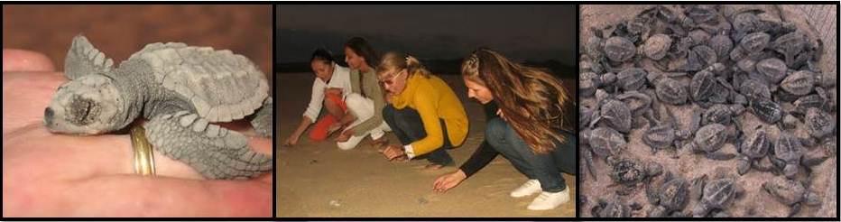 Liberación de Tortugas Los Cabos