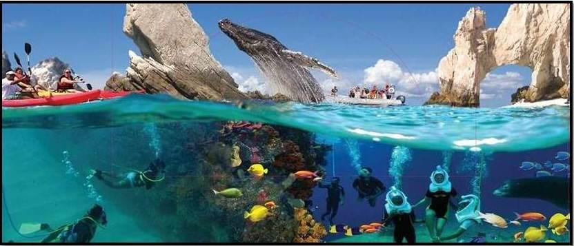 Actividades en Los Cabos